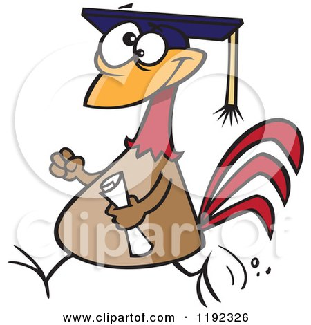 Cartoon of a Proud Chicken Graduate Walking with a Cap and Diploma - Royalty Free Vector Clipart by toonaday