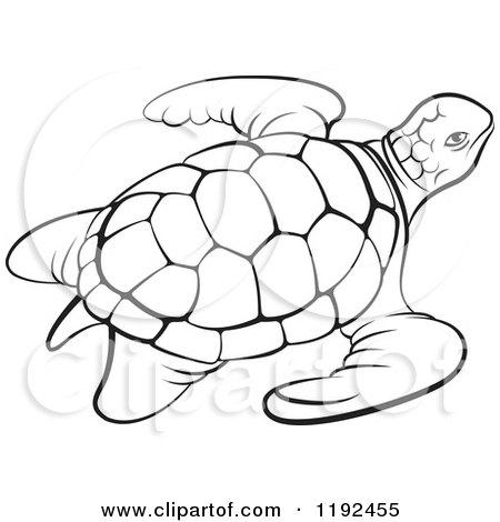 Sea Turtle Outline Clipart