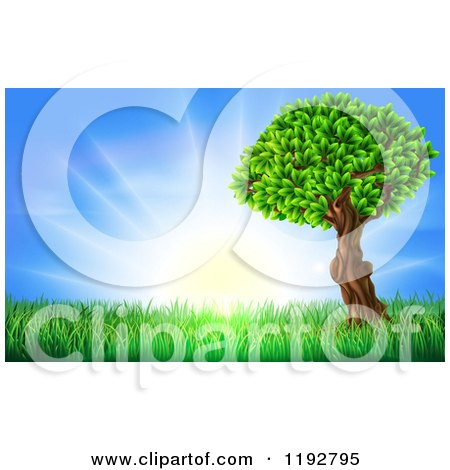 Cartoon of a Lush Tree and Grass at Sunrise - Royalty Free Vector Clipart by AtStockIllustration