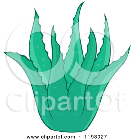 Cartoon of a Green Aloe Plant - Royalty Free Vector Clipart by visekart