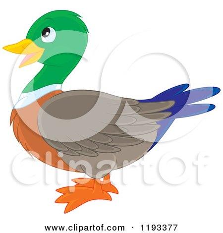 Cartoon of a Cute Mallard Duck in Profile - Royalty Free Vector Clipart by Alex Bannykh
