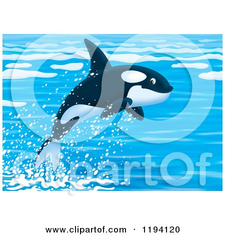 Cartoon of a Cute Orca Killer Whale Leaping out of Water - Royalty Free Clipart by Alex Bannykh