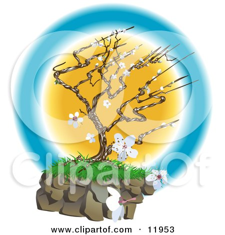 Pretty Japanese Tree With White Blossoms Clipart Illustration
