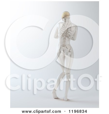 Clipart of a Rear View of a 3d Nude Woman with Visible Skeleton, on Gray - Royalty Free CGI Illustration by Mopic