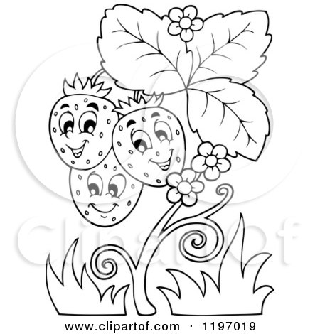 Cartoon of a Happy Outlined Strawberries on a Plant - Royalty Free Vector Clipart by visekart