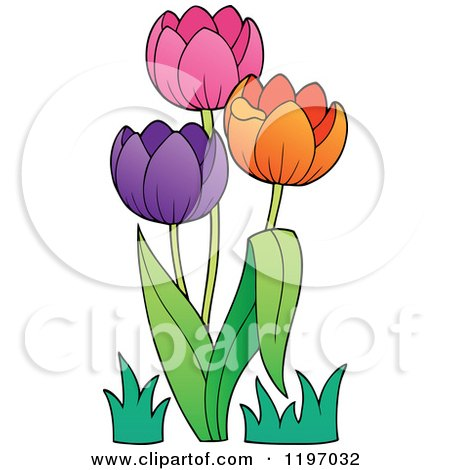 Cartoon of Colorful Tulip Flowers - Royalty Free Vector Clipart by visekart