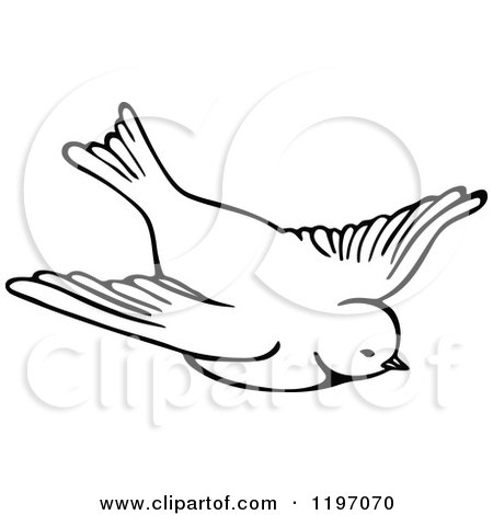 Clipart of a Black and White Flying Bird - Royalty Free Vector Illustration by Prawny