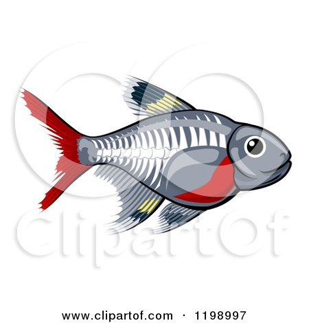 Cartoon of a Cute X-ray Tetra Freshwater Fish - Royalty Free Vector Clipart by AtStockIllustration