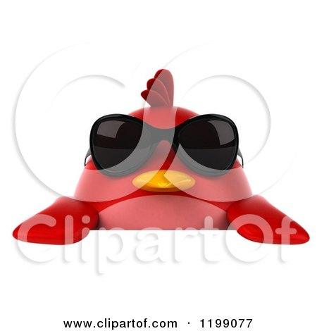 Clipart of a 3d Chubby Red Bird Wearing Sunglasses over a Sign - Royalty Free CGI Illustration by Julos