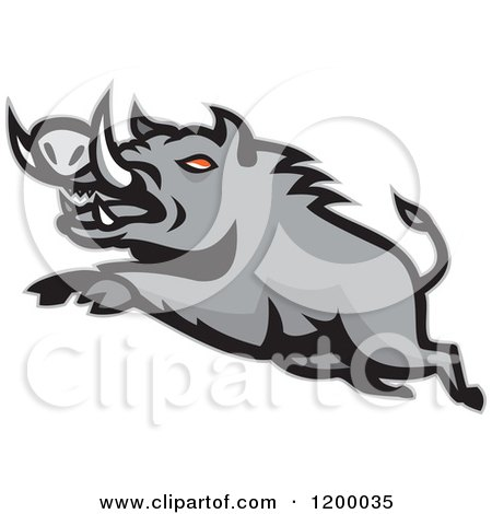 Clipart of a Mad Angry Razorback Boar Leaping - Royalty Free Vector Illustration by patrimonio