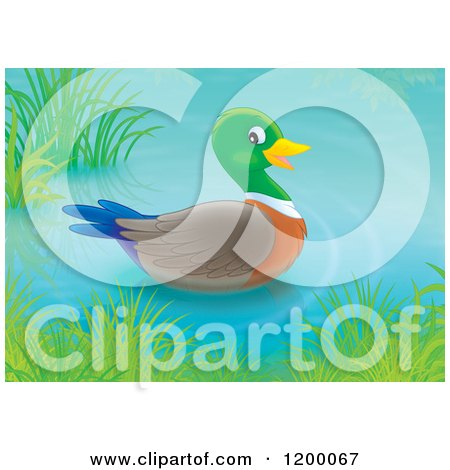 Cartoon of a Cute Mallard Duck Drake Floating on a Pond - Royalty Free Vector Clipart by Alex Bannykh
