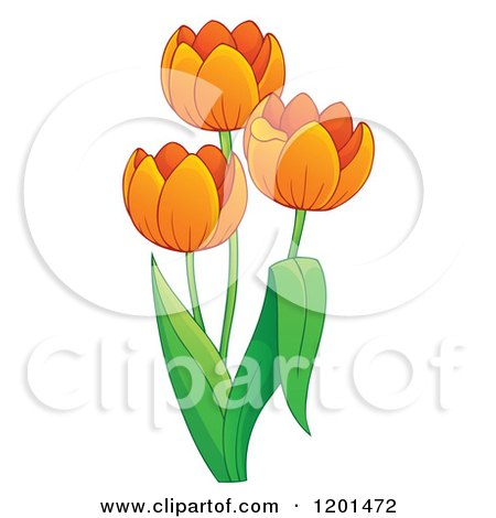 Cartoon of a Tulip Plant with Orange Flowers - Royalty Free Vector Clipart by visekart