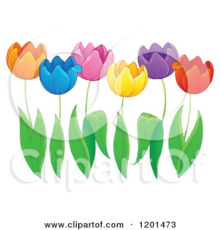Cartoon of Colorful Tulip Flowers and Green Leaves - Royalty Free Vector Clipart by visekart