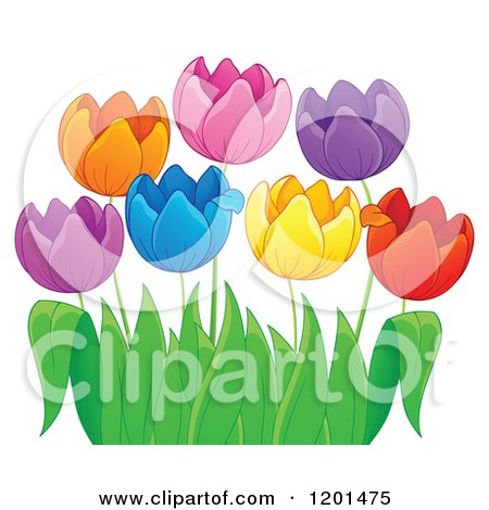Cartoon of Colorful Tulip Flowers and Green Leaves 3 - Royalty Free Vector Clipart by visekart
