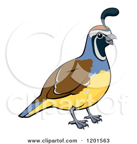 Cartoon Of A Cute Quail And Chick Royalty Free Vector