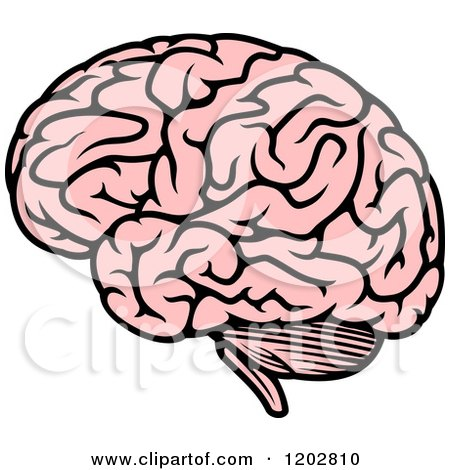 Royalty Free Stock Illustrations of Brains by Vector ...