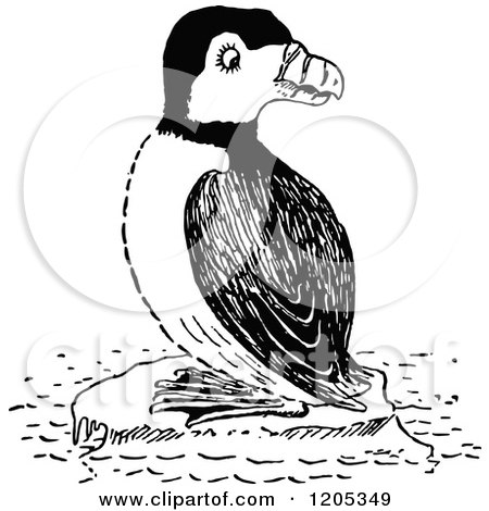 Clipart of a Puffin Bird in Profile - Royalty Free Vector ...