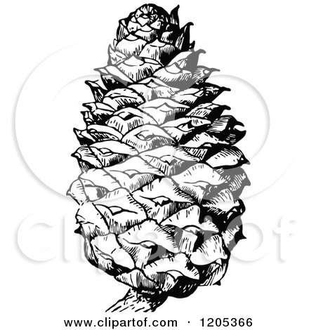Clipart of a Vintage Black and White Pine Cone - Royalty Free Vector Illustration by Prawny Vintage