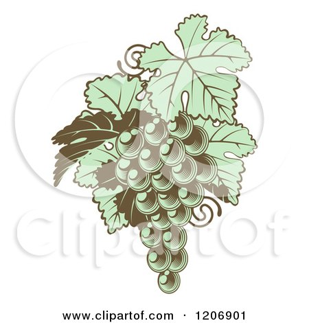 Clipart of Gren Grapes with Leaves in Woodblock - Royalty Free Vector Illustration by AtStockIllustration