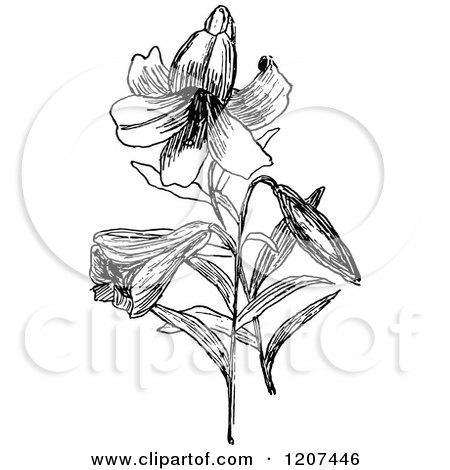 Clipart of a Vintage Black and White Easter Lily - Royalty Free Vector Illustration by Prawny Vintage