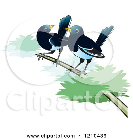 Clipart of Two Magpies on a Branch - Royalty Free Vector Illustration by Lal Perera