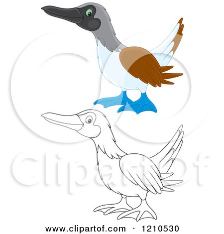 Cartoon of an Outlined and Colored Blue Footed Boobie Bird - Royalty Free Vector Clipart by Alex Bannykh