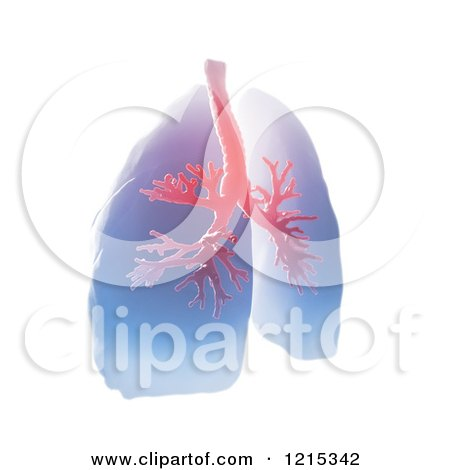 Clipart of a 3d Pair of Human Lungs and Bronchi on White - Royalty Free Illustration by Mopic