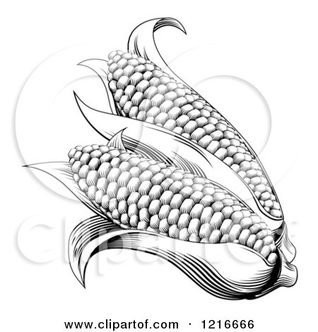 Clipart of Vintage Woodcut Styled Ears of Corn in Black and White - Royalty Free Vector Illustration by AtStockIllustration