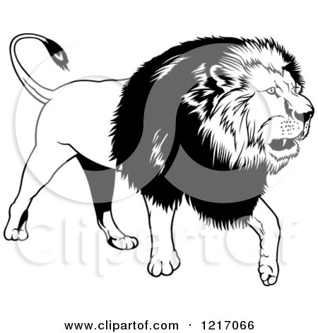 Clipart of a Black and White Walking Lion - Royalty Free Vector Illustration by dero