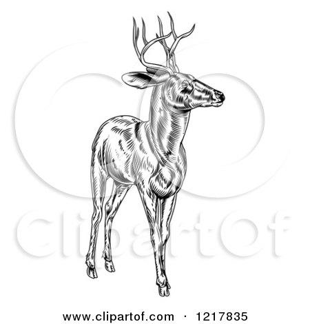 Deer illustration black and white - photo#24