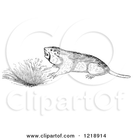 Clipart of a Black and White Pocket Gopher by a Den - Royalty Free Vector Illustration by Picsburg