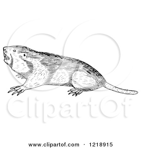 Clipart of a Black and White Pocket Gopher - Royalty Free Vector Illustration by Picsburg