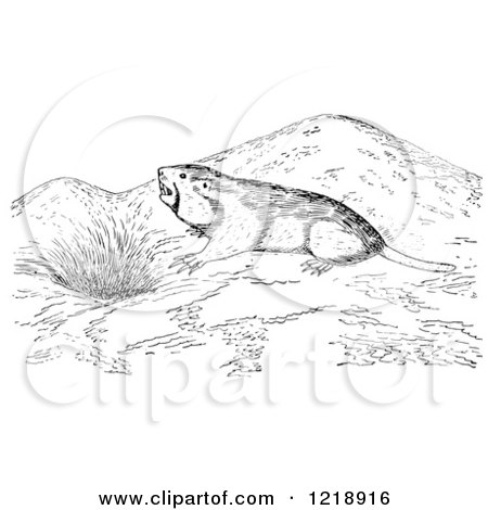 Clipart of a Black and White Pocket Gopher Outside a Den - Royalty Free Vector Illustration by Picsburg