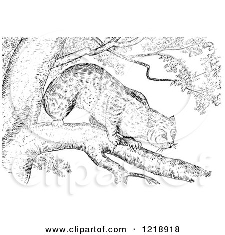 Clipart of a Black and White Bobcat in a Tree - Royalty Free Vector Illustration by Picsburg