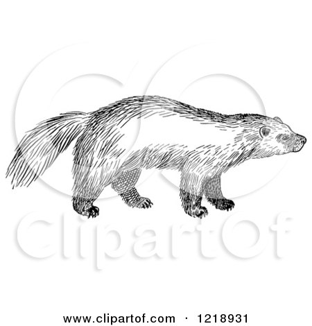 Clipart of a Black and White Wolverine - Royalty Free Vector Illustration by Picsburg
