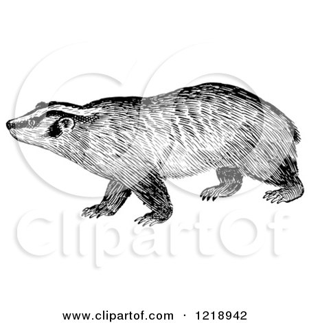 Clipart of a Black and White Badger - Royalty Free Vector Illustration by Picsburg
