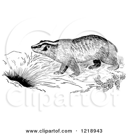 Clipart of a Black and White Badger by a Den - Royalty Free Vector Illustration by Picsburg