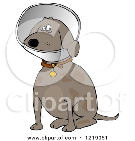 Clipart of a Sitting Brown Dog Wearing an Elizabethan Colar Cone - Royalty Free Illustration by djart
