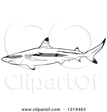 White Tip Reef Shark Drawing White Blacktip Reef Shark