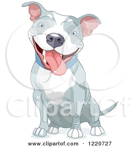 Cute Happy Gray and White Pit Bull Dog Sitting Posters, Art Prints
