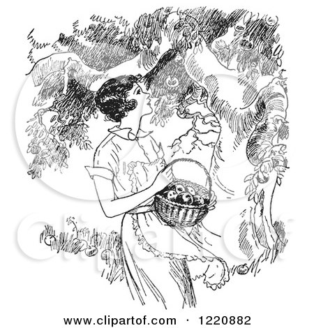 apple tree clipart black and white. black and white retro woman picking apples from a tree by picsburg apple clipart