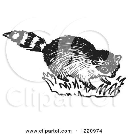 Clipart of a Black and White Raccoon - Royalty Free Vector Illustration by Picsburg