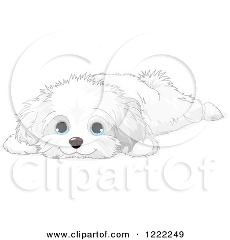 Clipart of a Cute Bichon Frise or Maltese Puppy Dog ...