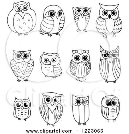 Black and white owls posters art prints