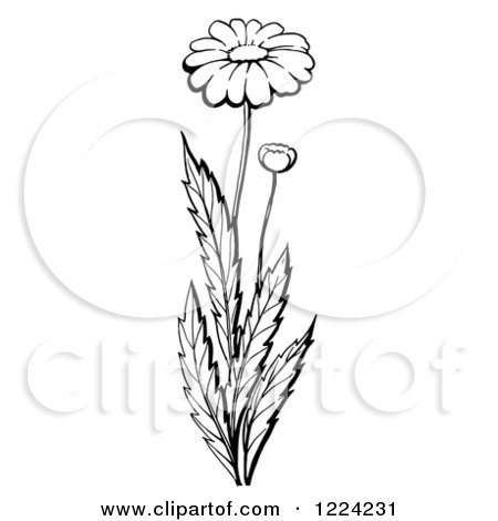 Clipart of a Black and White Daisy Plant with a Flower and Bud - Royalty Free Vector Illustration by Picsburg