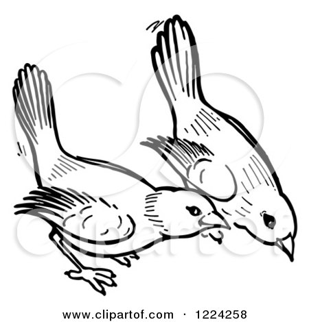 Clipart of Black and White Birds Pecking the Ground - Royalty Free ...