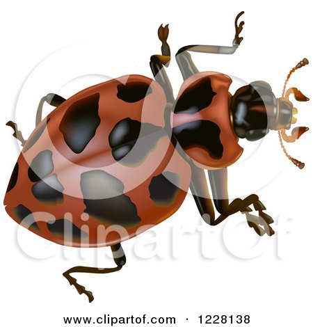 Clipart of a Spotted Beetle - Royalty Free Vector Illustration by dero