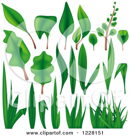 Clipart of Green Grass Leaves and Plants - Royalty Free Vector Illustration by dero