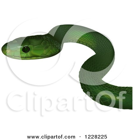 Clipart of an Eastern Green Mamba Snake - Royalty Free Vector Illustration by dero