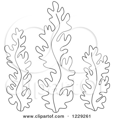 seaweed and coral coloring pages | Clipart of Outlined Seaweed - Royalty Free Vector ...